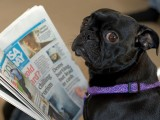 Is your press release for the dogs?